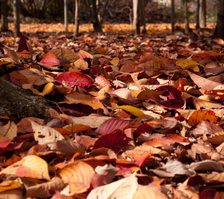 秋の景色 落ち葉 スマートフォン用 待受け 壁紙 1440 1280 Android向け