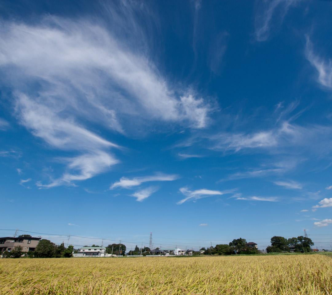 秋の景色 田園と秋の空 スマートフォン用 待受け 壁紙 1080 960