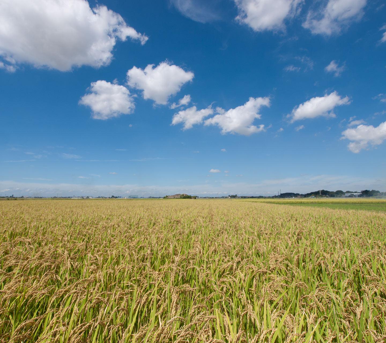 秋の景色 田園と秋の空 スマートフォン用 待受け 壁紙 1440 1280