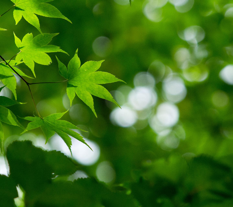 シンプル待受け 緑の森 スマートフォン用 壁紙 待受け 1440 1280